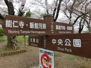 飯能中央公園の桜2015